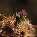 Eine grüne Wanze macht sich über die Pflanze her
