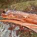 faszinierend-interessanter Holzzerfall