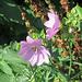 hübsche Blumen