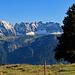 eine einsame Tanne mit bestem Blick zur Alvierkette