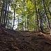 Anstieg durch herbstlich bunten Wald