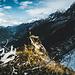 Super Aussichtspunkt über Chamonix.