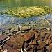 L'acqua limpida del Laghetto dei Salei.