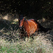 Braunes Pferd