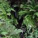 Das Wasser der Sierra Nevada sorgt für subtropische Vegetation