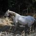 Komisch, auf jeder Wanderung unseres Kurztrips tauchen [https://www.youtube.com/watch?v=JReB027yKS8 Weisse Pferde] auf. Was soll uns das sagen?