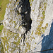 Rückblick zum Felsspaltaus aus dem unteren Bereich der letzten Wand. Vermutlich war die Kamera hier nicht ausnivelliert, wobei die perspektivische Verzerrung noch das ihre dazu tut.