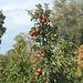 Apfelparadies Thurgau