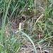 Ganz hinten im Rütschlibachtobel: Bei der gelben Markierung geht es halblinks zum Rütschlibachpfad und rechts zur Direttissima Nord