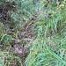 Rütschlibachpfad: gut sichtbare Spur im Fallätsche-Lehm - dem Bach entlang aufwärts