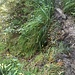 Der Querpfad ist erreicht, links etwas schwächer sichtbar der Rütschlibachpfad, der in die Tiefe führt