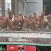 Hühnerstall bei Hasenburg