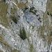 beim Abstieg vom Söllerpaß kann man nochmal gut den Einstieg in das Grasband unterhalb der Wand begutachten