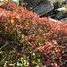 Der Herbst erfreut mit seinen Farben