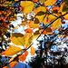 ...der goldene Herbst ist da