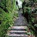 aufwärts über diese Natursteintreppe