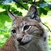 das obligate Katzenfoto (Katze in etwas größerer Ausführung), er schaut etwas traurig.
