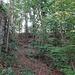 ...in den Wald hinein...