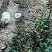Die Pilzsaison hat begonnen, überall sprießt es aus dem Boden