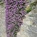 Un bouquet di fiori ben augurale alla partenza.....