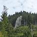Hübsche Kalkzapfen im Wald