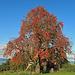 Zeugen vom Herbst