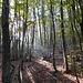 Magnifico bosco.