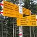 """Terminati i boschi di faggio, iniziano le conifere. Qui siamo nei pressi della località """"Arbinetto"""" e saliremo seguendo i cartelli di dx tornando invece dalla Capanna Genzianella."""