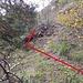 Gleich nach dem Einstieg kann man sich nach links (in Gehrichtung) wenden, eine kleine Runse überqueren und den nächsten (vorerst wenig bewachsenen) Rippenkamm gewinnen.