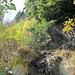 Auf dem Felsenweg durch die steile Nordflanke vom Seebuck