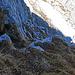 Rückblick auf den ersten Streckenteil von meinem zweiten Versuch, der erfolgreich war, - etwas weiter dem Felsfuss entlang bis zu dieser Stelle wandern, der Anfang über einen gut abgestuften Fels-Wiesenhang ist leicht zu meistern, mit zunehmender Höhe wird es aber immer schwieriger, mit Kletterstellen im (KS, I bis II) Grad geht es aber recht gut bis zum Gipfel der Schijenflue, den besten Weg muss sich jeder selbst suchen, Spuren im oberen Teil gibt es keine, - auch keine wegweisenden Steinmännchen.
