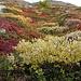 Meister Herbst hat seine Farben ausgestreut