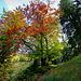 Bunte Herbstfarben... im schönen Abstieg über den Wenigberg