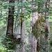 der nasse Sommer flutet den Wald