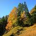 Bereits zum Start zeigt sich der Herbst von seiner besten Seite