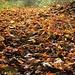 Montagsdemo - die Blätter wollen keinen Winter!