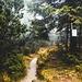 Ab hier geht es im Bannwald weiter, in diesem ist so ziemlich alles verboten, er ist dafür aber wirklich unberührt und wunderschön