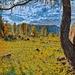 """In a frame""<br />James McNeil Whistler"