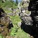 deep in the jungle .. 'Abkürzung' zwischen Torloch und Brisizustieg
