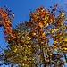 Weiter unten leuchtet wieder der Herbst in seinen schönsten Farben