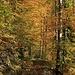 Waldpassage oberhalb der Cuvignette.