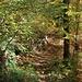 Durch den Wald ...