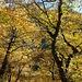 Colori d'autunno sul sentiero della val di cama
