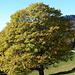 der Herbst bringt phantastische Farben in die Bäume I