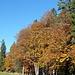 der Herbst bringt phantastische Farben in die Bäume II