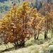 der Herbst bringt phantastische Farben in die Bäume IV