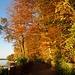 die schöne Seite des Herbsts