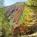 Faggi e pini creano dei bellissimi contrasti di colore.