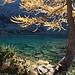 Lärchengold am Bergsee