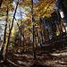 Durch den Herbstwald auf die Crest'Aulta